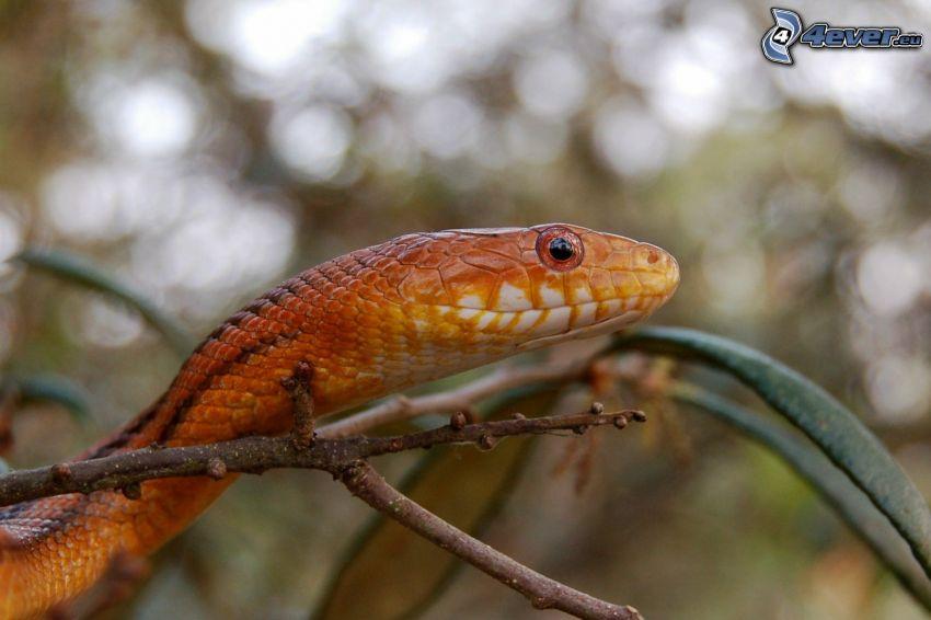 eye of the snake, snake, twig