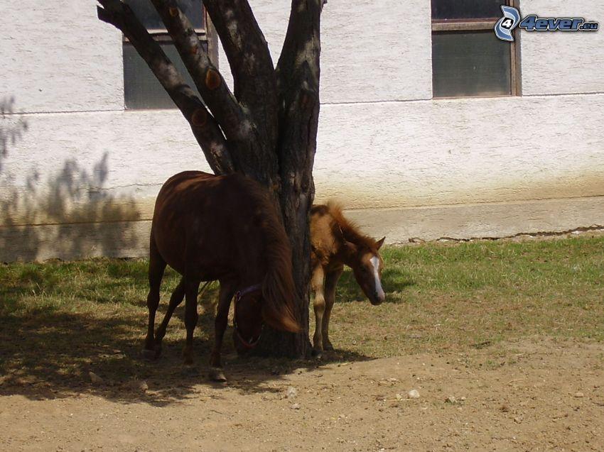 horses, animals, nature