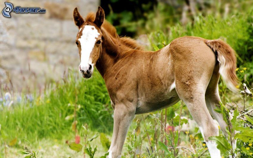 foal, plants