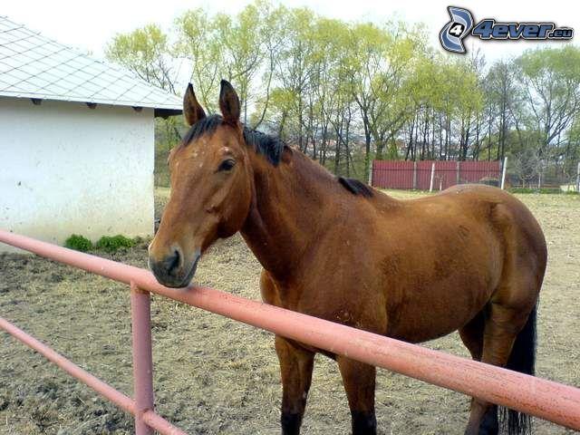 horse, animals, nature