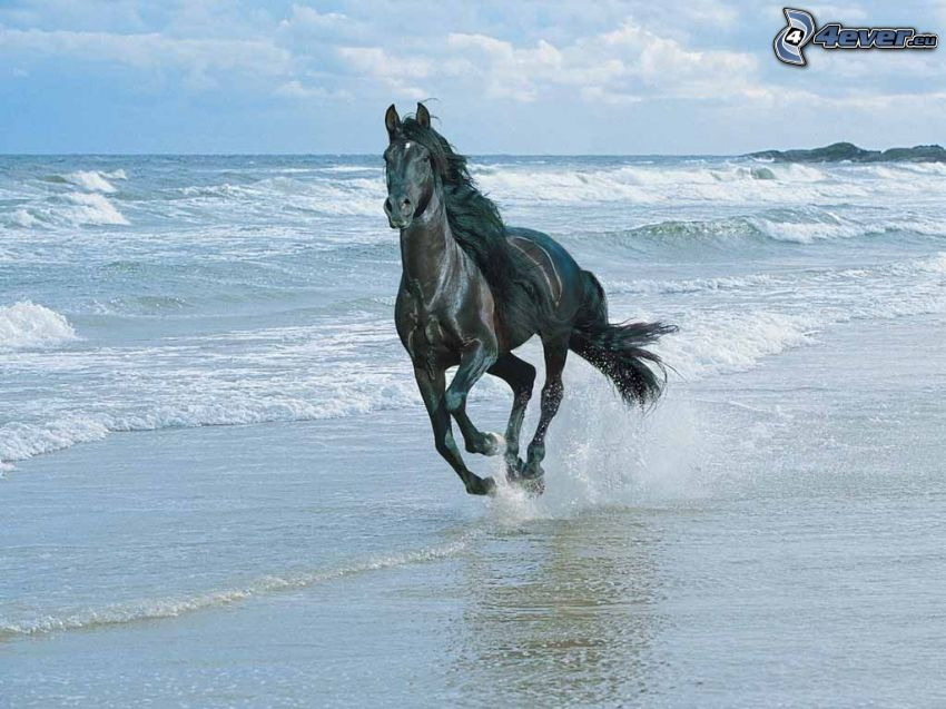 horse on the beach, sea, freedom, rocks