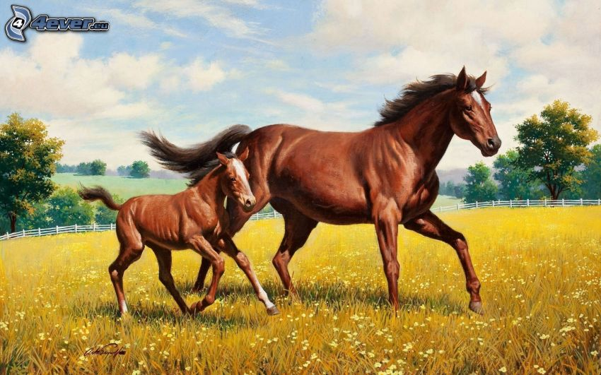horses, foal, meadow, fence, drawing