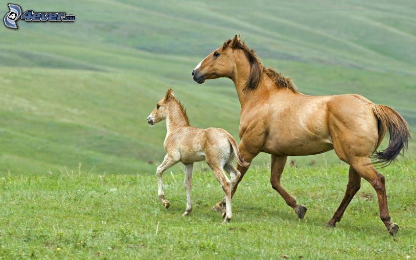 horses, foal