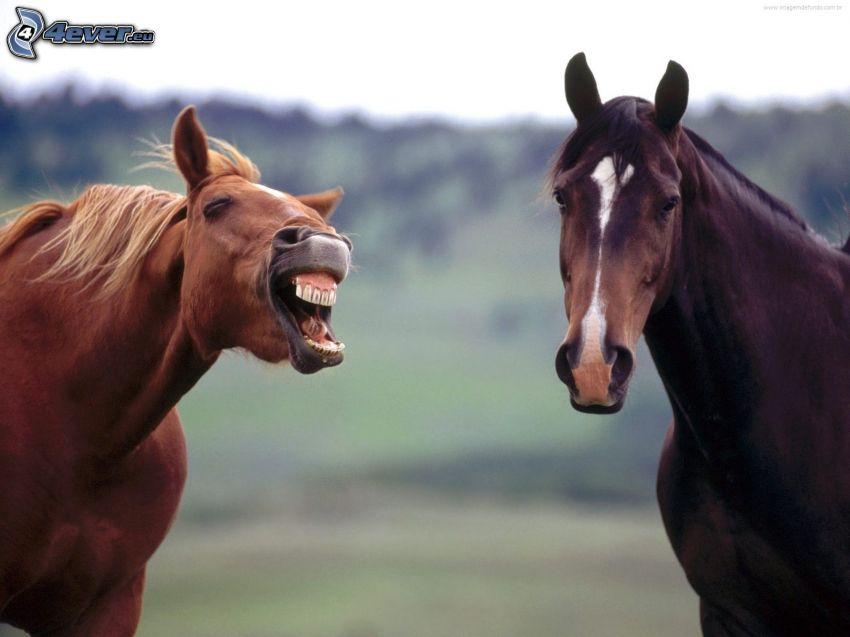 horses, teeth