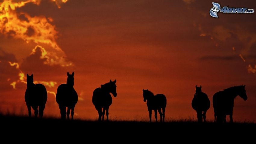 silhouettes of horses