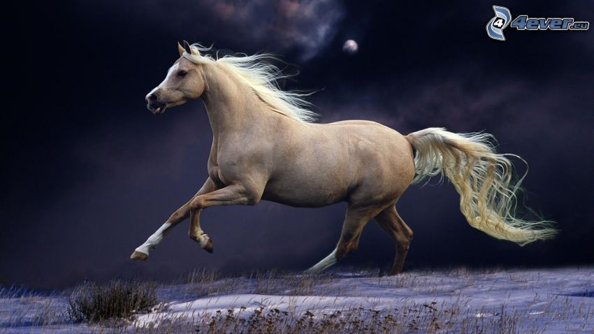 white horse, night, running horse
