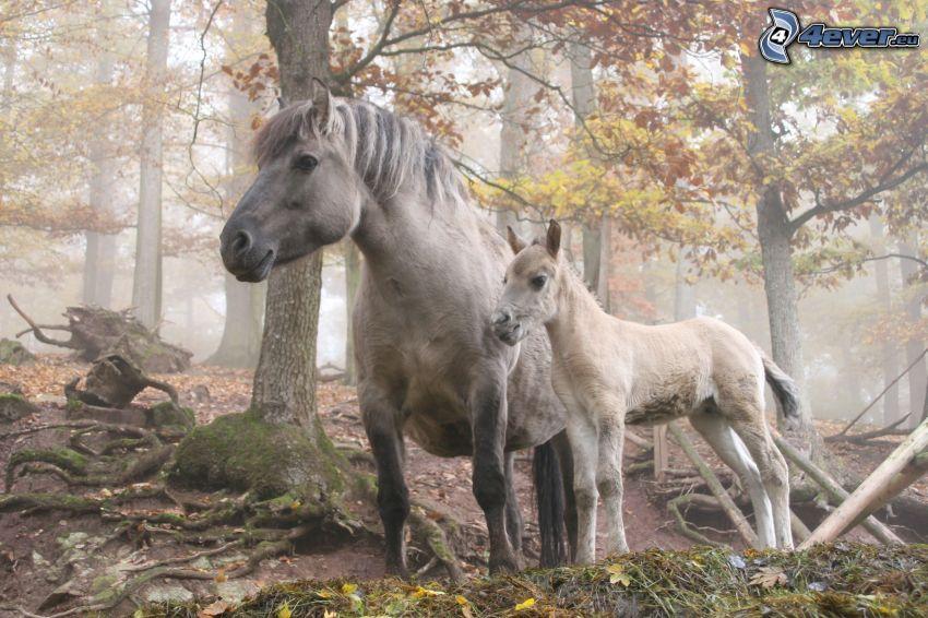 white horses, forest