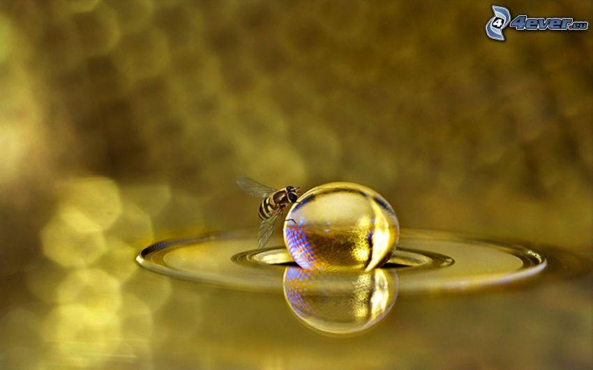 bee, drop, macro