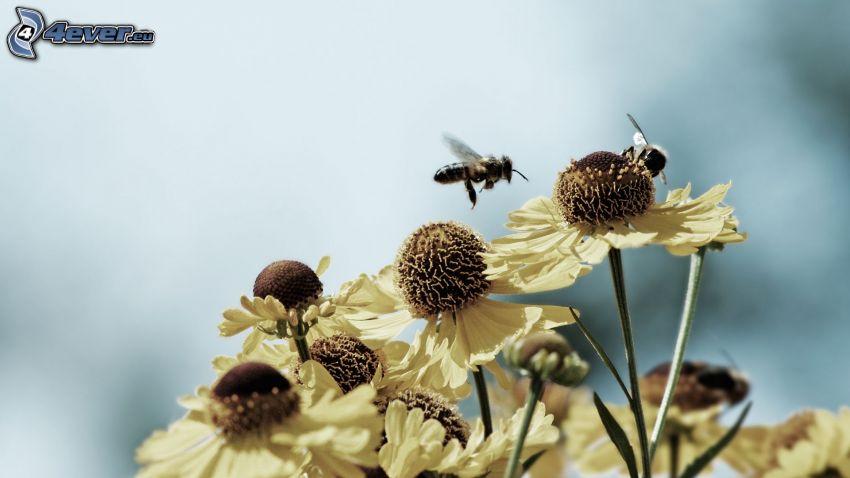 bees, flowers