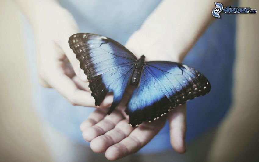 blue butterfly, hands