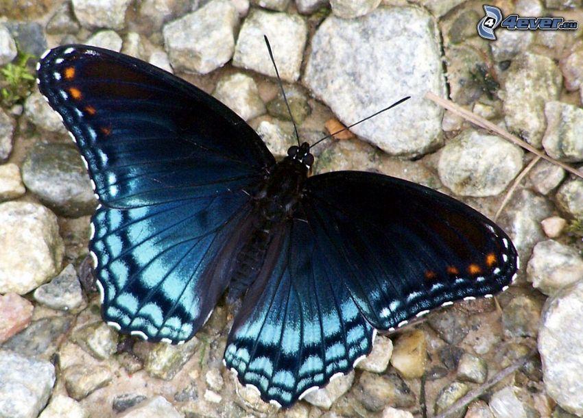 blue butterfly, rocks