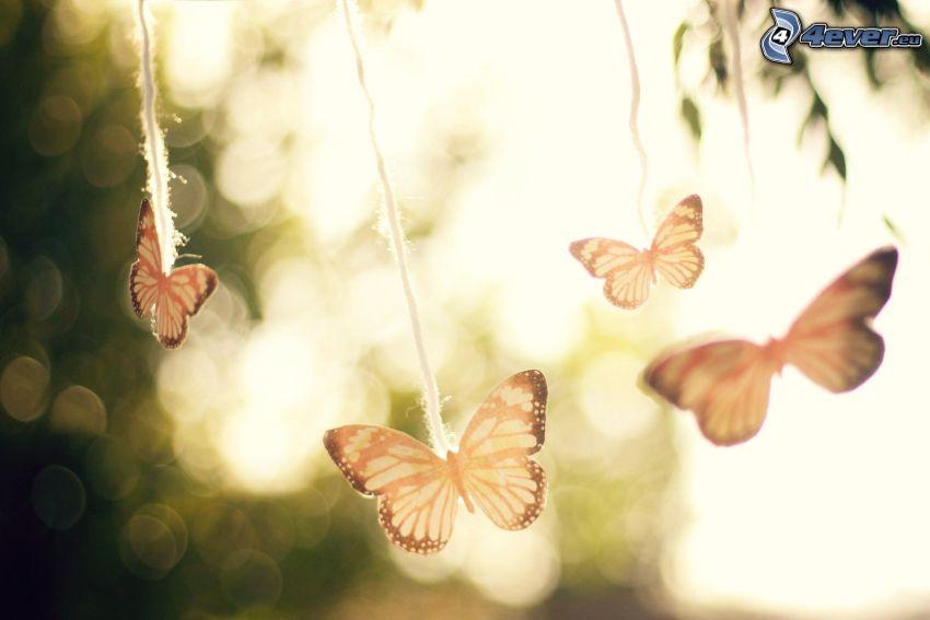 butterflies, boot-lace
