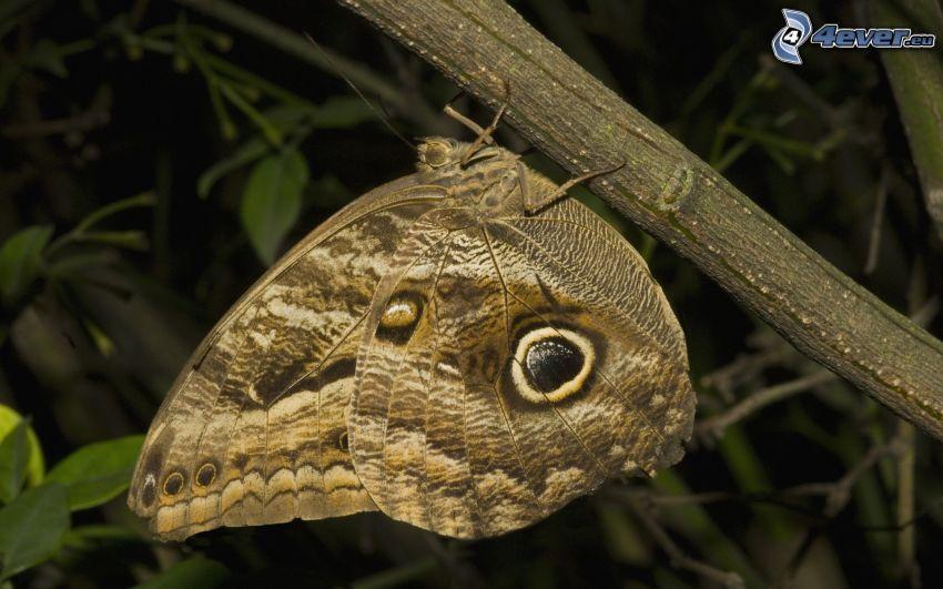 butterfly, macro, stem