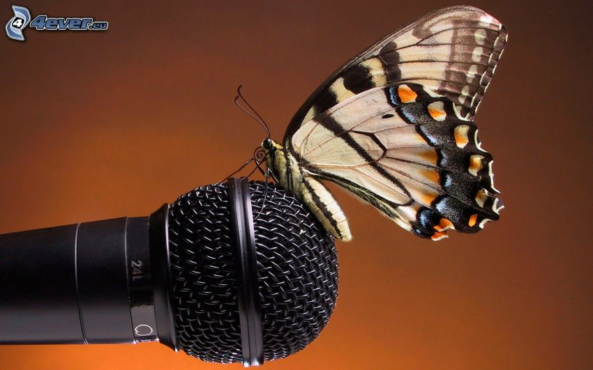 butterfly, microphone