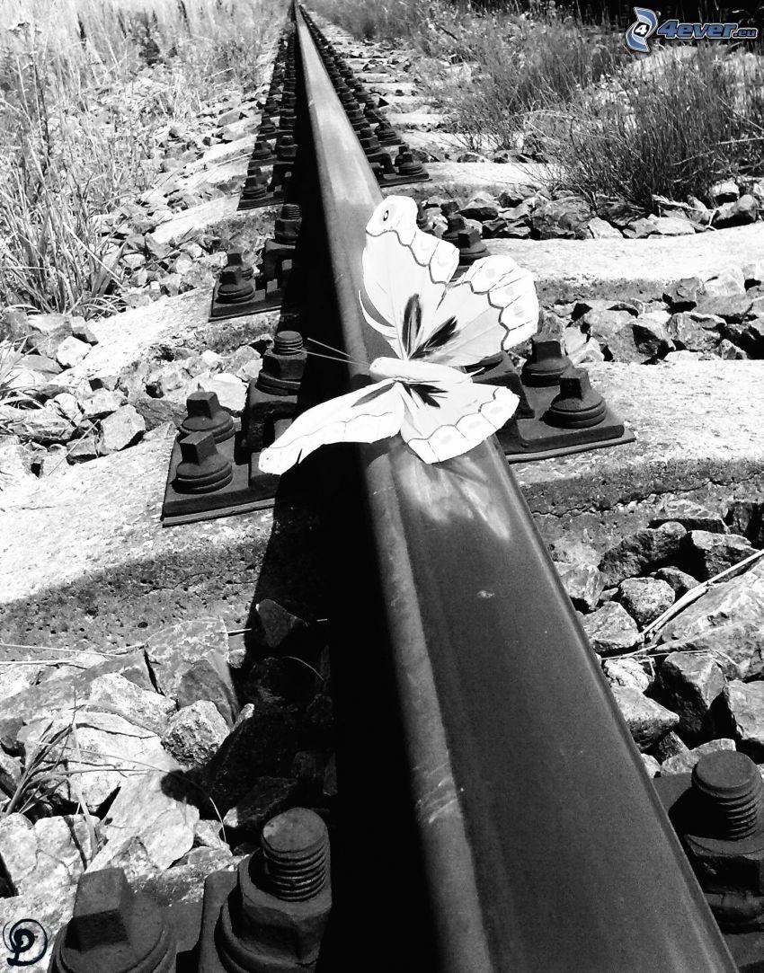 butterfly, rails