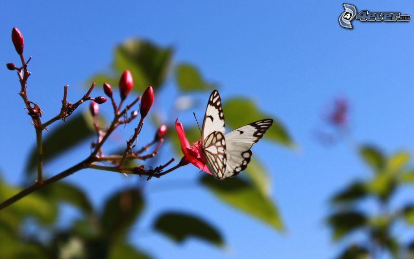 butterfly, twig