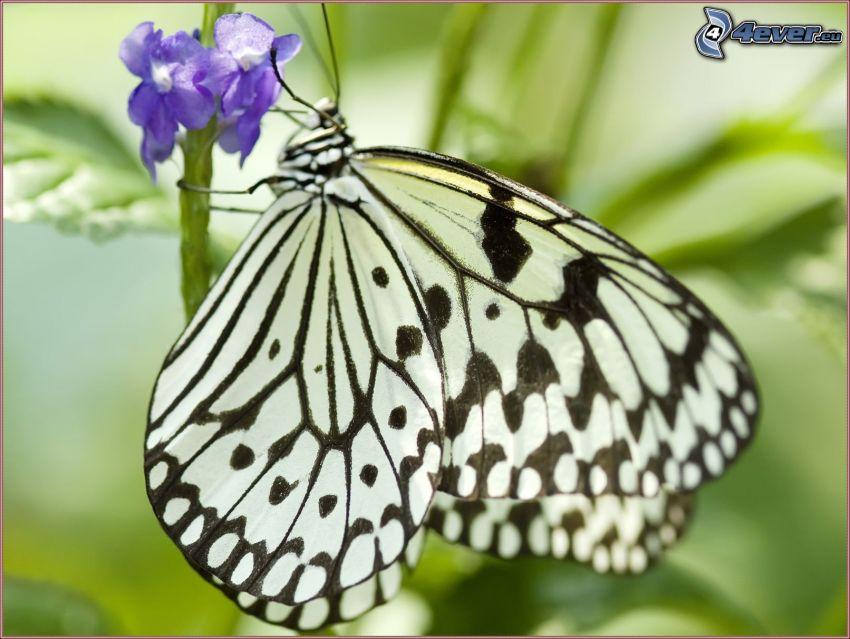 butterfly on flower, blue flower