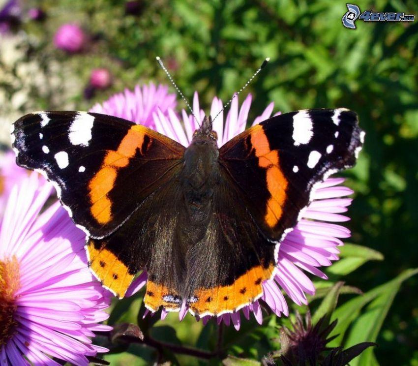 butterfly on flower, greenery