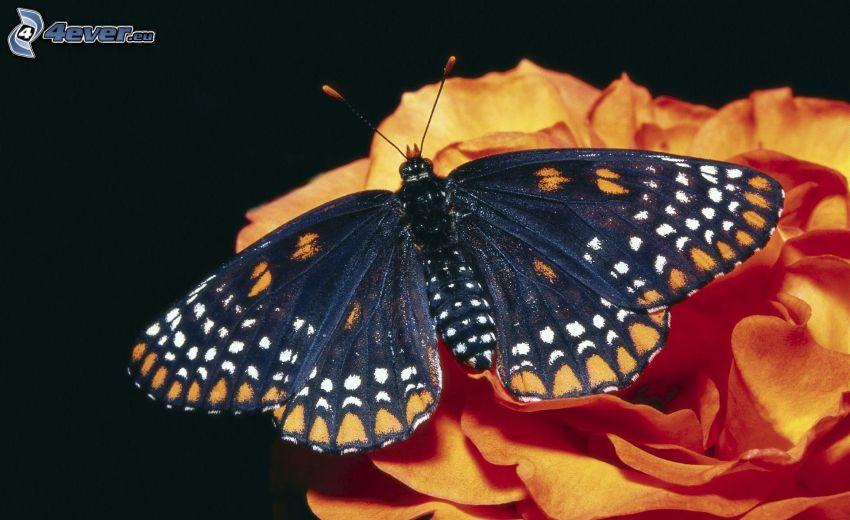 butterfly on flower, orange flower