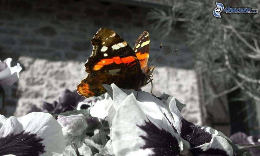 butterfly on flower, Photoshop