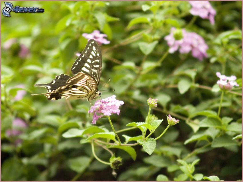 butterfly on flower, purple flower