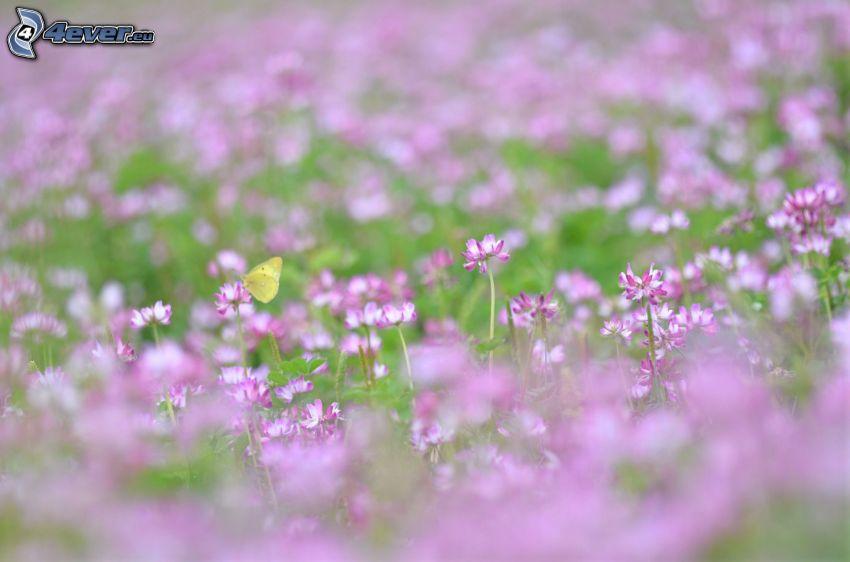 butterfly on flower, purple flowers