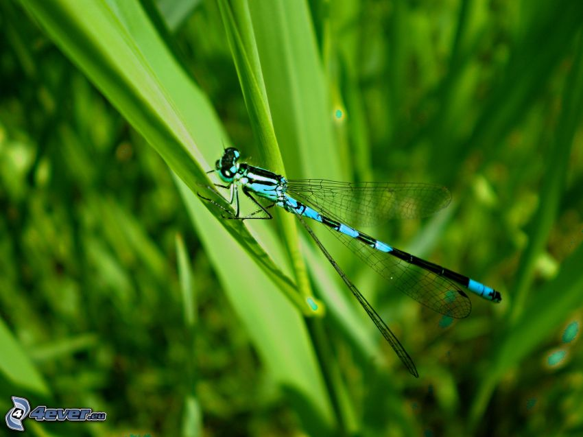 dragonfly, greenery