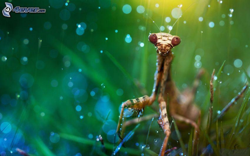 european mantis, grass, circles, digital art