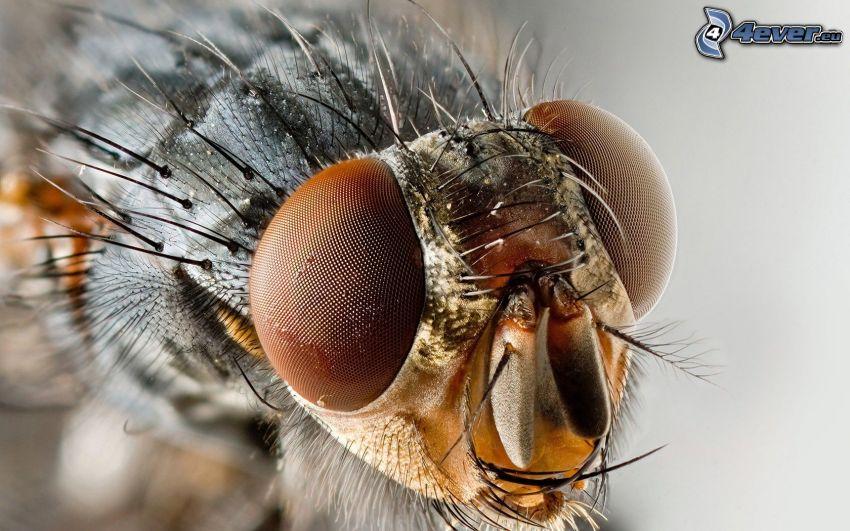 fly, eyes