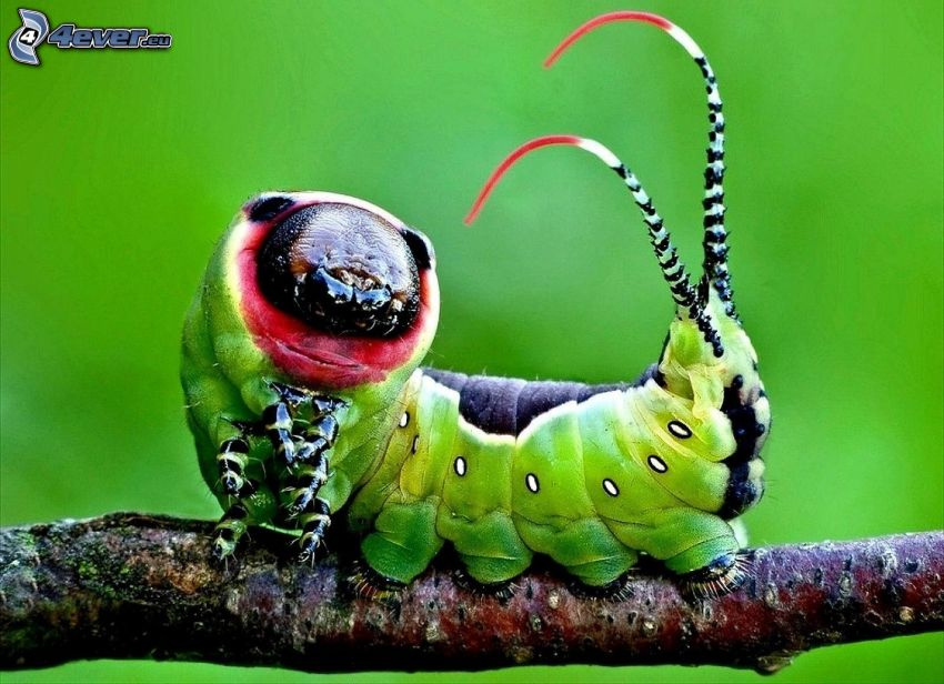green caterpillar, twig