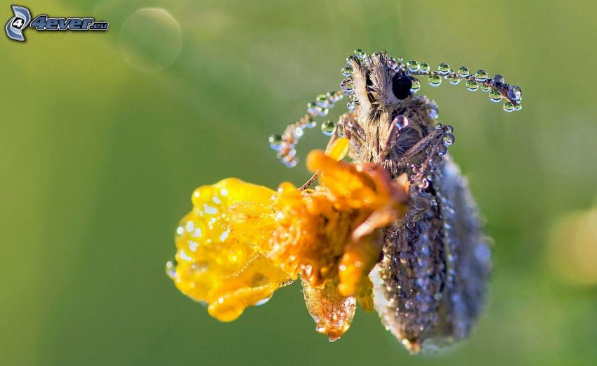 insects, drops