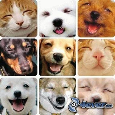 puppies, kittens, smile, collage