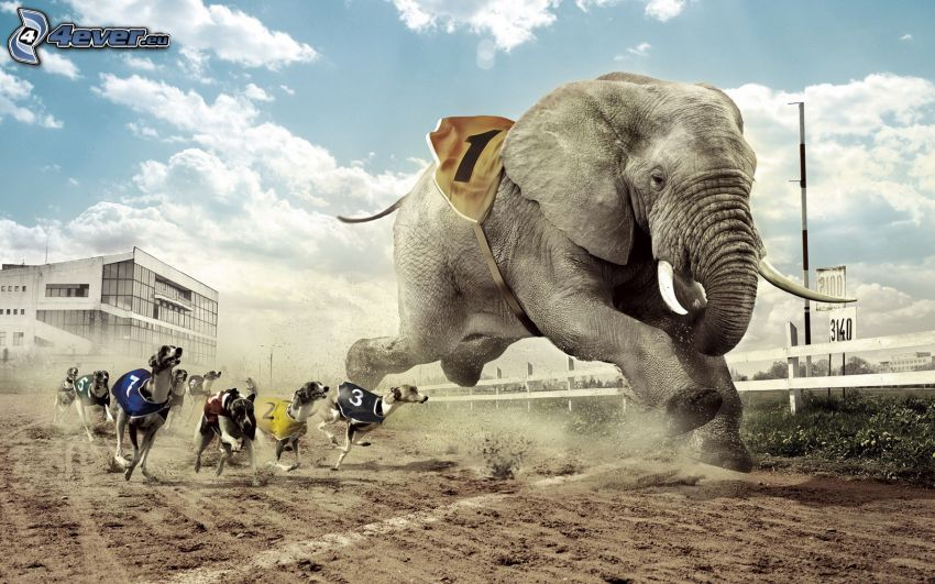 race, elephant, dogs