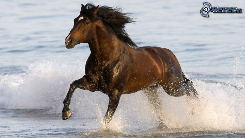 running horse, sea