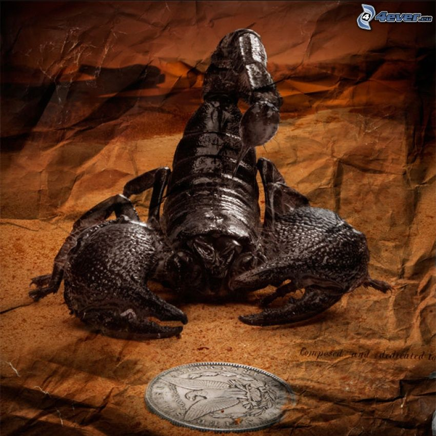 scorpion, coin