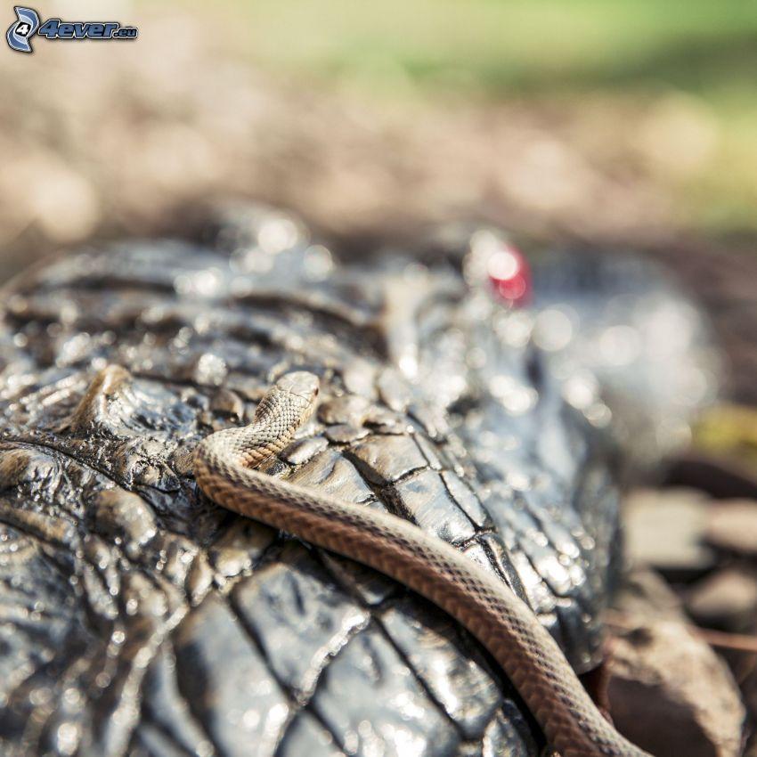 snake, tree bark