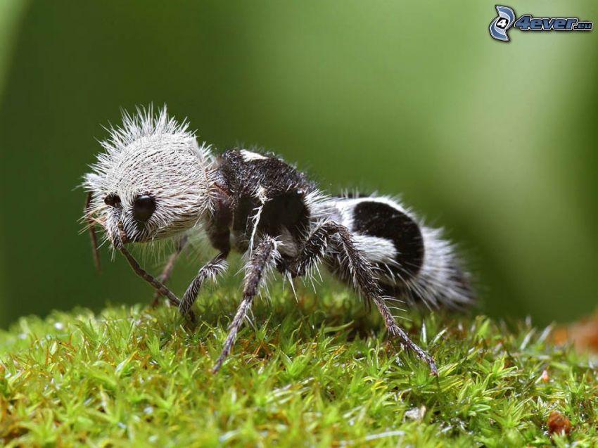 spider, moss