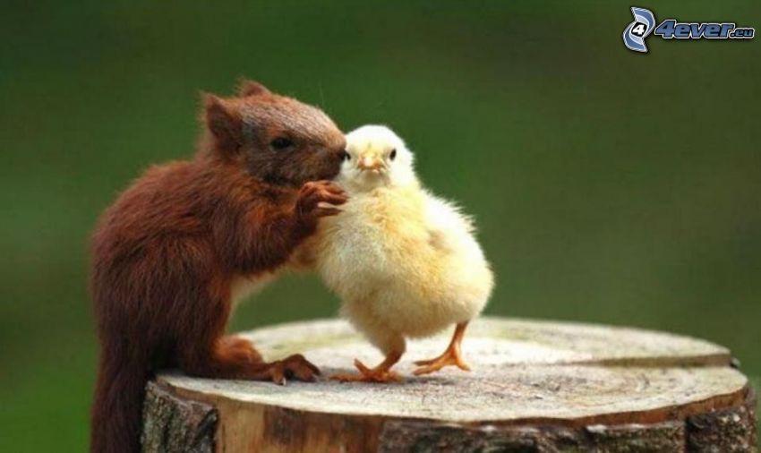 squirrel, chick, stump