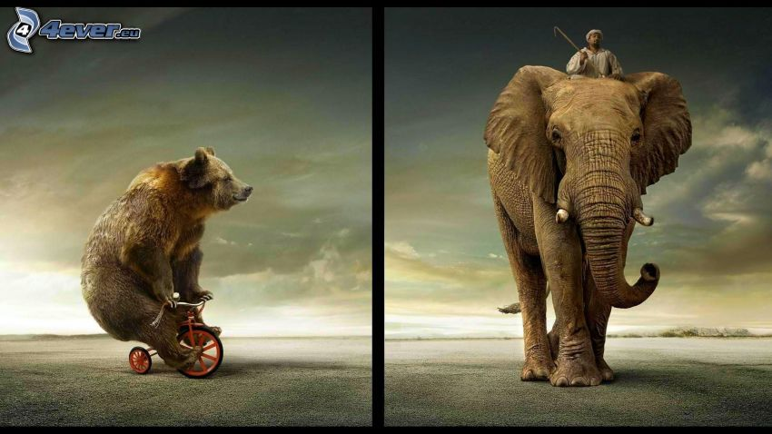 bear, bicycle, elephant, man