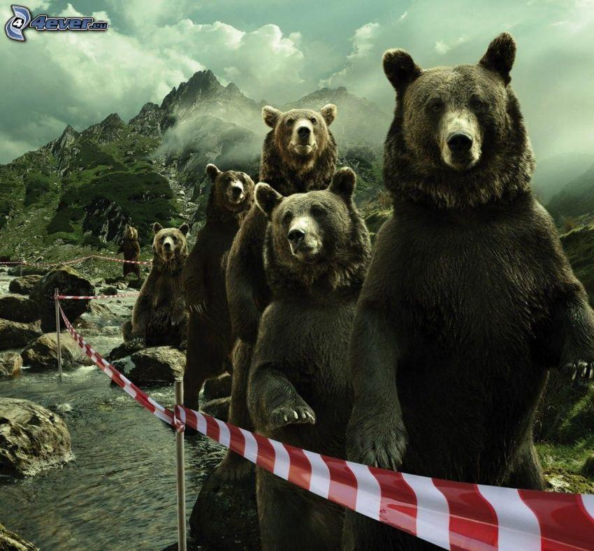 bears, stream, rocky mountains