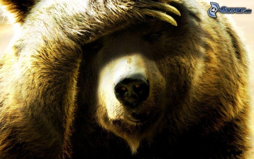 brown bear, snout, paw