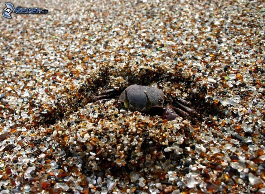 crab, gravel