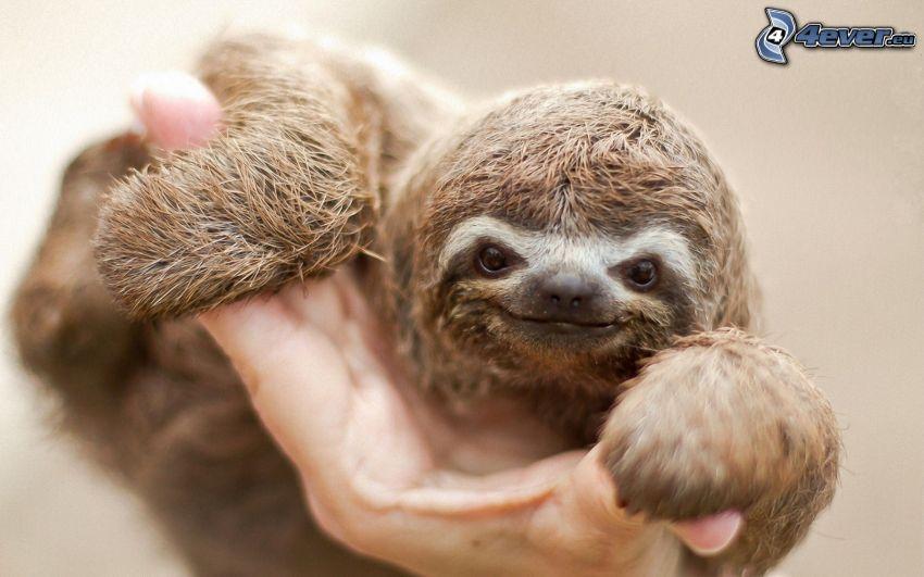 cub, sloth