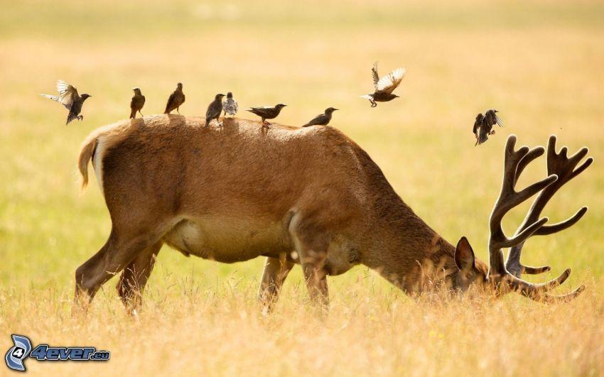 deer, birds