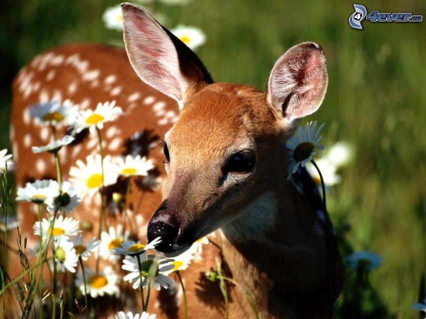 deer, flowers