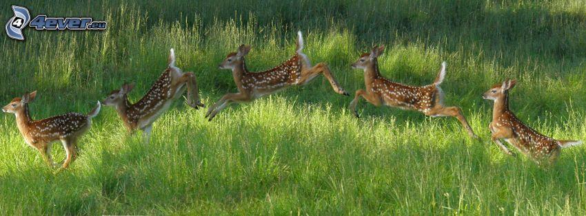 deers, jump, grass