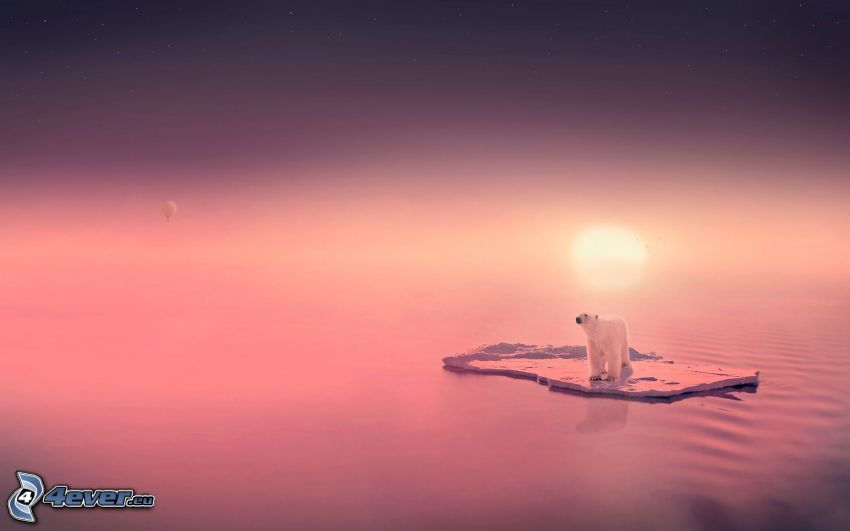polar bear, iceberg, purple sunset