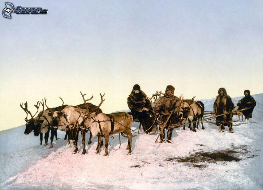 reindeers, Eskimo