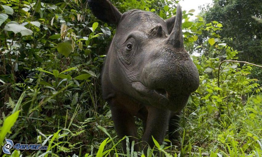 rhino, greenery