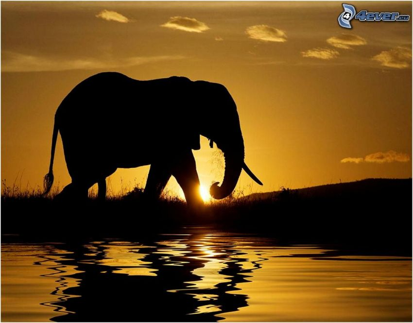 silhouettes of elephants, elephant, sunset, water